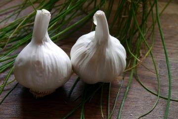 garlic-498634_1280