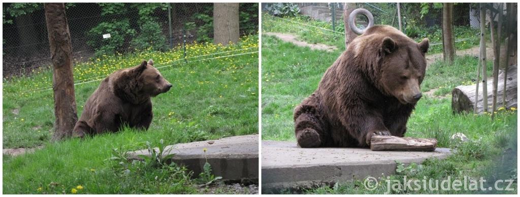 Medvědi se tady houpou, drbou a když je teplo i koupou.
