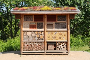 insect-house-598354_1280