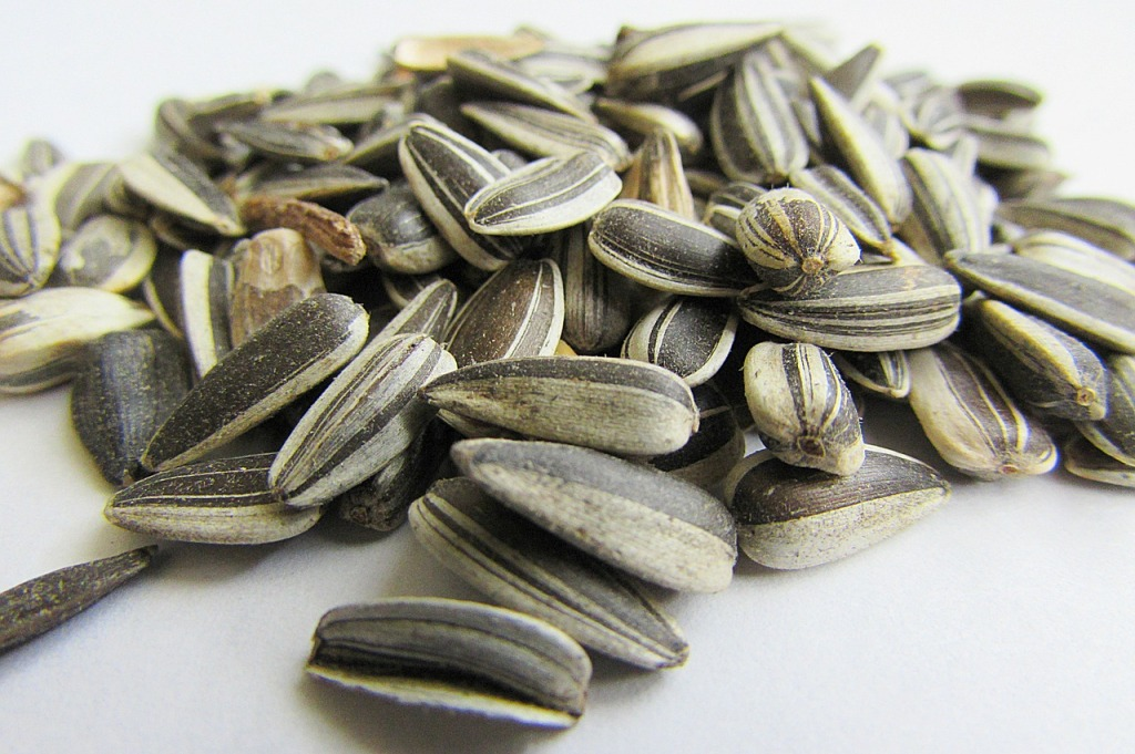 sunflower-seeds-537652_1280