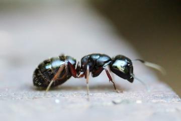 ant-453348_1920