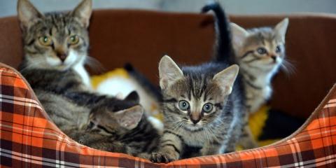 cat-727258_1280