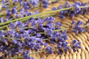lavender-730740_1280