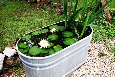 pond-aunt-joyce-480