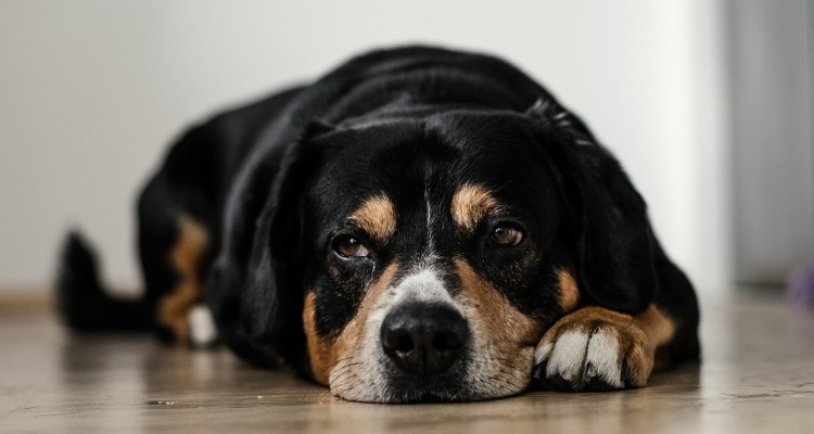 dog-691641_1280
