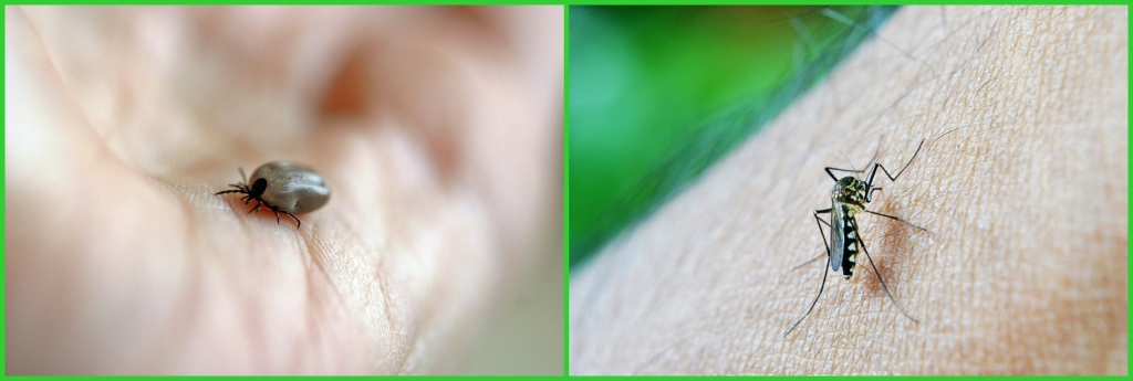 Dobře vybraný přírodní repelent vám pomůže proti komárům a klíšťatům.