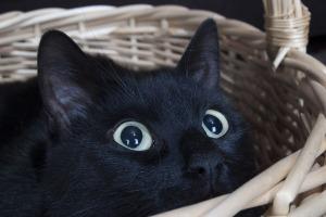 cat-869204_1280