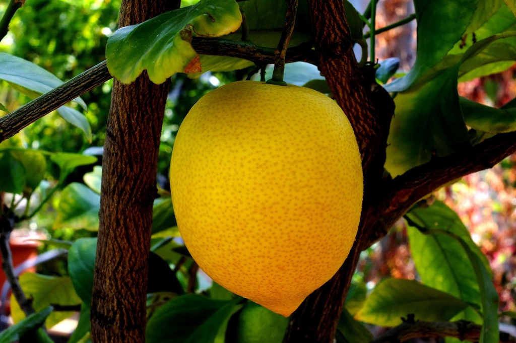 lemon-814166_1920