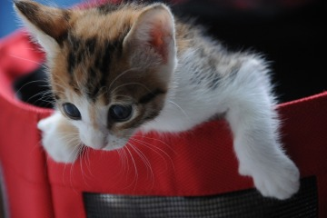 small-cat-868152_1280