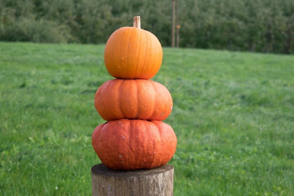 5 pumpkins-504122_1280