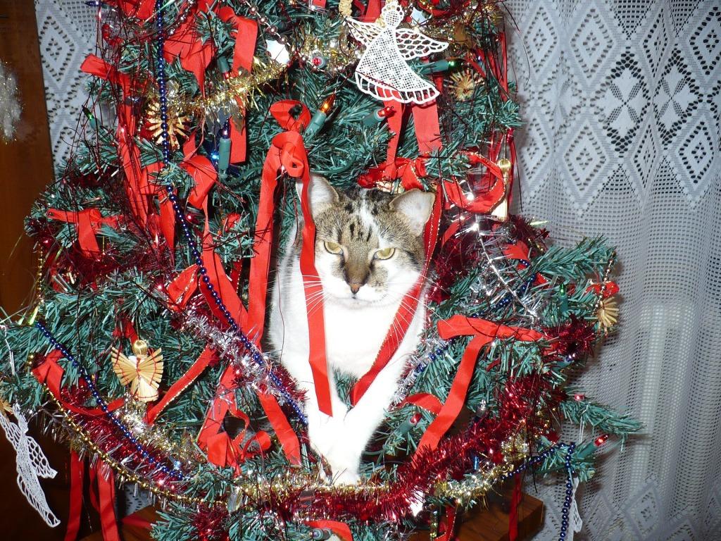 Kromě krmení je v kočičí domácnosti potřeba promyslet zajištění stromku. Šplhání žádná kočka neodolá.