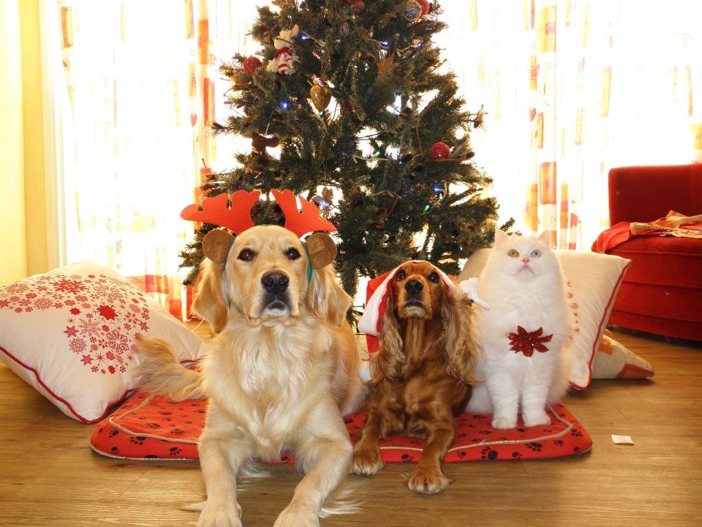 Vánoce jsou o umnění odolat hladovým pohledům a nedat zvířatům nic od stolu.