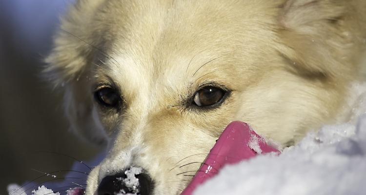dog-697825_1280
