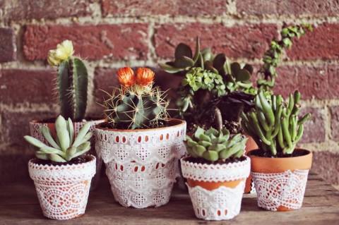lace-plant-pots-480x319