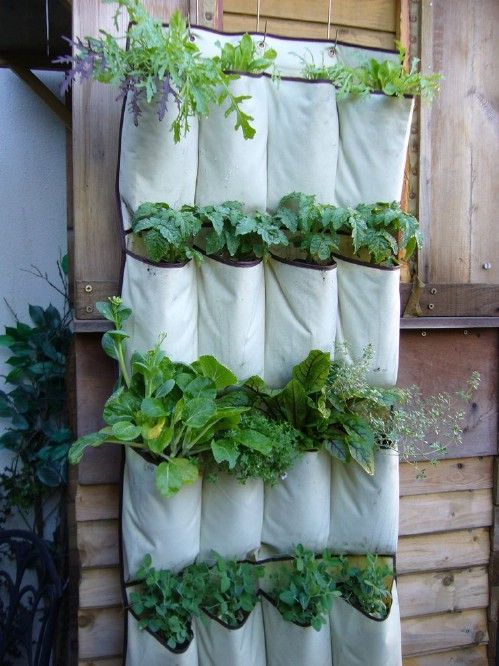 12 AD-Creative-DIY-Vertical-Gardens-For-Your-Home-17