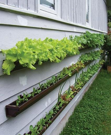 7 AD-Creative-DIY-Vertical-Gardens-For-Your-Home-12