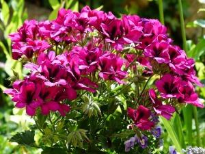 flowers-167923_640