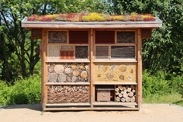 insect-house-598354_640