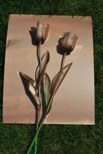spray-paint-roses-500x746