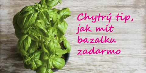 Jaksiudelat.cz_bazalka