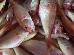 fish-234677_640