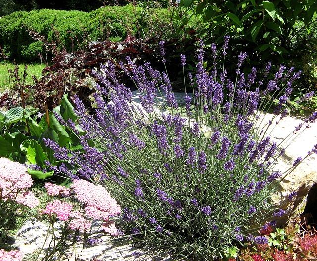lavender-945999_640