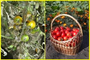 tomato-608290_640-horz