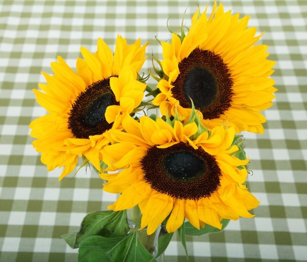sunflower-21480_1280