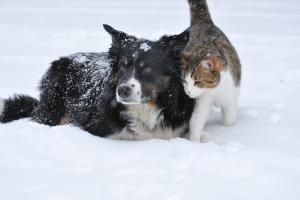 dog-1755423_640