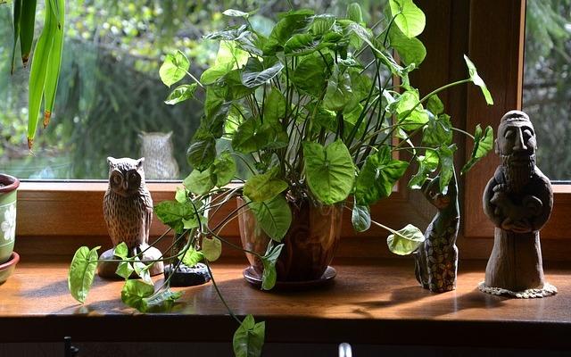 plant-324784_640