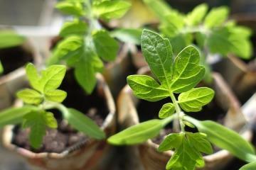 plant-999375_640