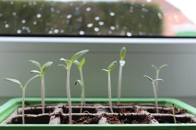 plant-1290191_640