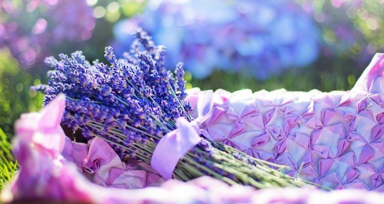 lavender-2482372_1280