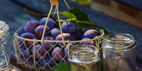 plums-1649305_1280