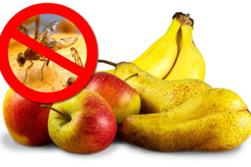 Jak-na-ovocne-musky